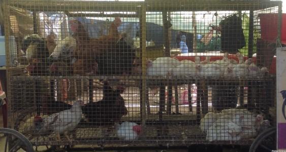 Welcome Chicken Shop