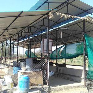 Walni Dairy Farm