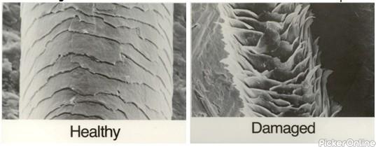 Dwarka Skin Cosmetic & Trichology Clinic