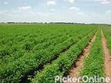 Maharashtra State Agricultural Marketing Board