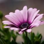 Ritu Seeds And Nurseries