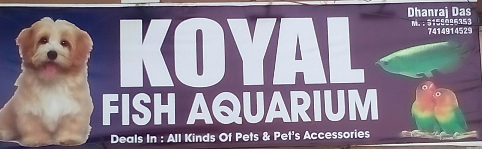 Koyal Fish Aquarium