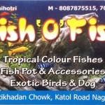 Fish 'O' Fish