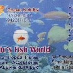 Aquatic's Fish World