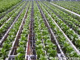 Pranav Agro Industries