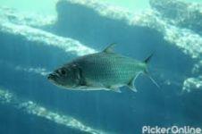 Swaraj Fish Aquarium
