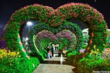 Ankush Flowers & Decorators